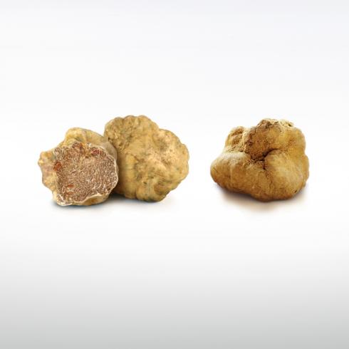 White Truffles Make Italy